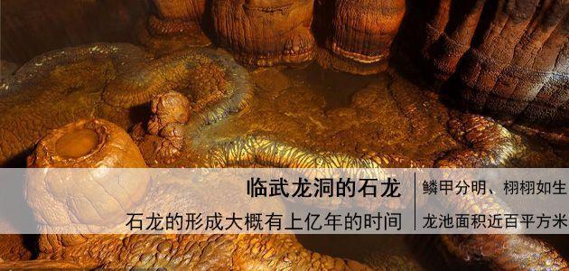 湖南临武龙洞出现栩栩如生的石龙